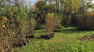 Dalla birra spillata ad Expo sono 'nati' 1150 alberi, al via la piantumazione in Lombardia